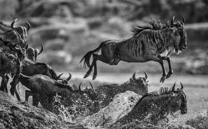 Les superbes photos noir & blanc de David Yarrow 46