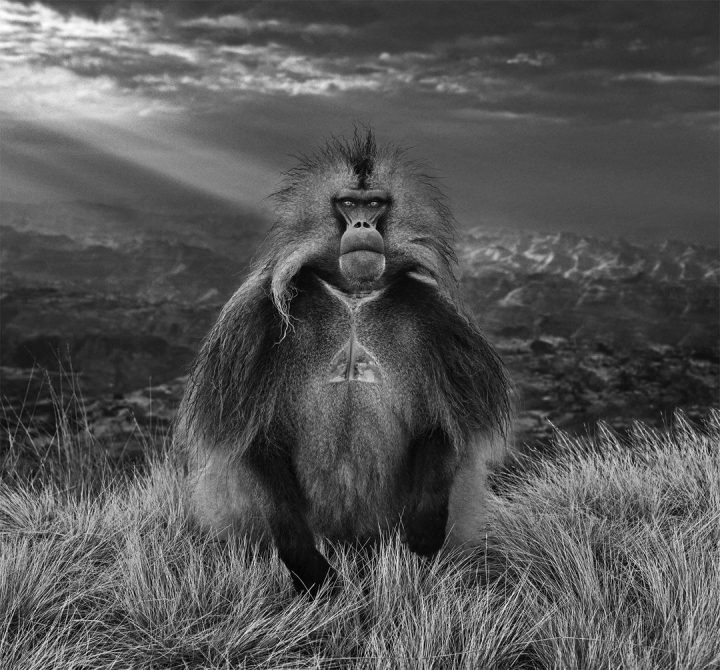 Les superbes photos noir & blanc de David Yarrow 47