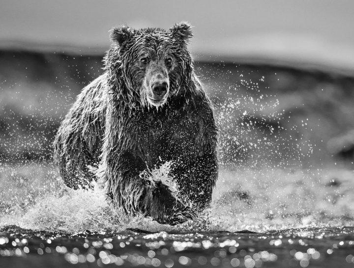 Les superbes photos noir & blanc de David Yarrow 48