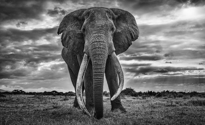 Les superbes photos noir & blanc de David Yarrow 50