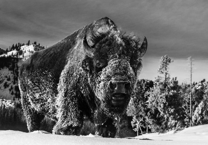 Les superbes photos noir & blanc de David Yarrow 52