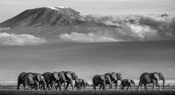 Les superbes photos noir & blanc de David Yarrow 7