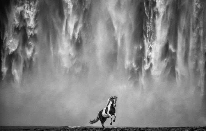 Les superbes photos noir & blanc de David Yarrow 10