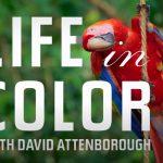 Un reportage sur les couleurs des animaux