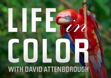 Un reportage sur les couleurs des animaux 7