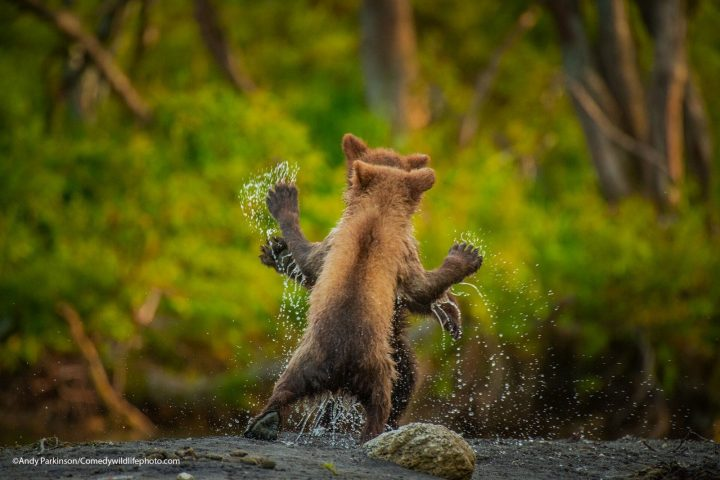 Comedy Wildlife Photography Awards 2021 6