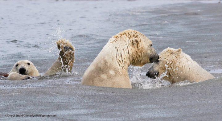 Comedy Wildlife Photography Awards 2021 14