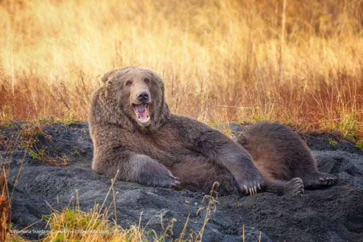Comedy Wildlife Photography Awards 2021 17