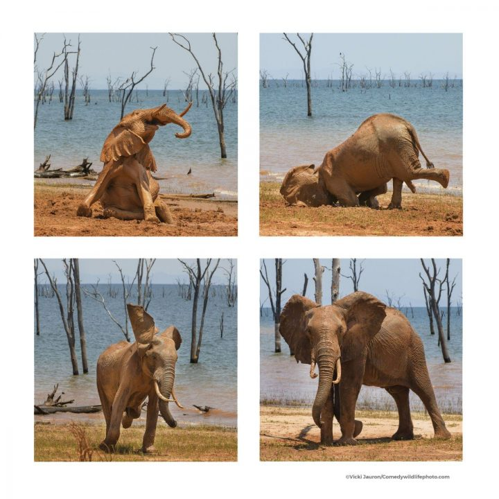 Comedy Wildlife Photography Awards 2021 21
