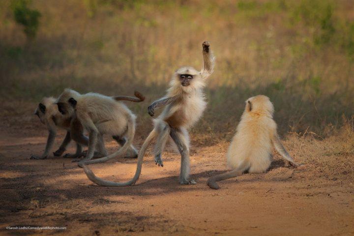 Comedy Wildlife Photography Awards 2021 42