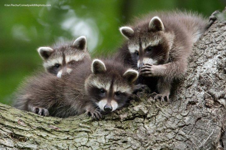Comedy Wildlife Photography Awards 2021 29