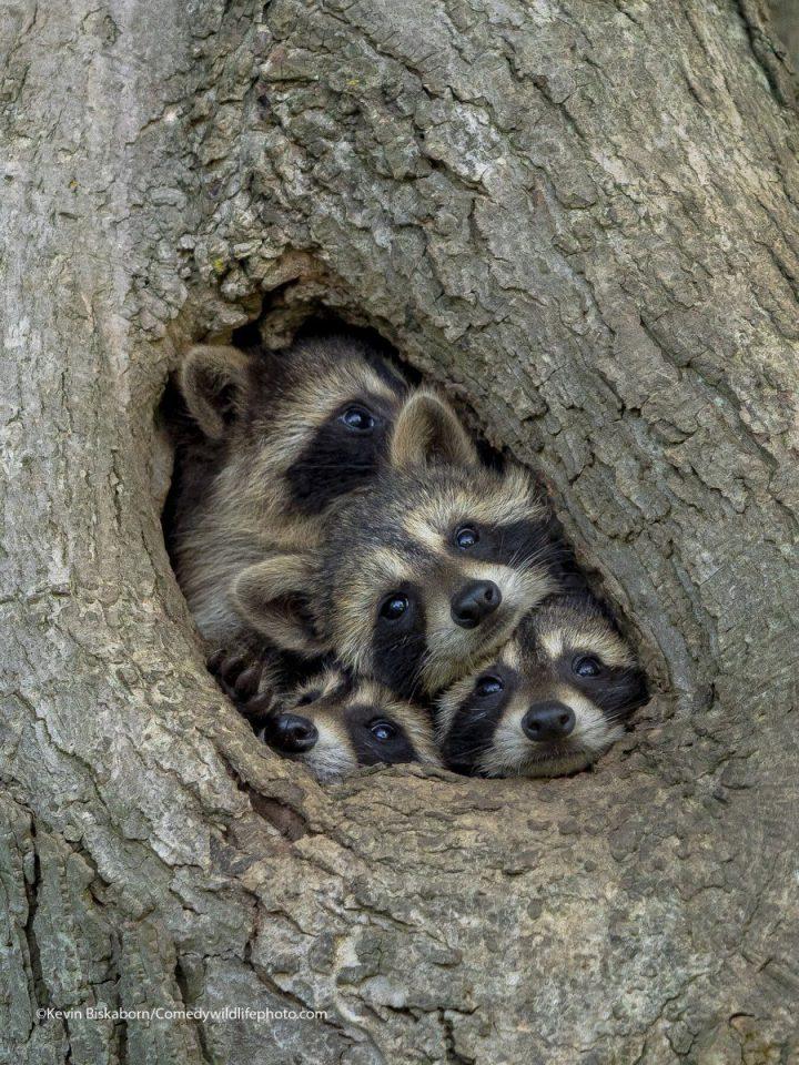 Comedy Wildlife Photography Awards 2021 33